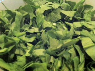 Salad Bed - Spinach